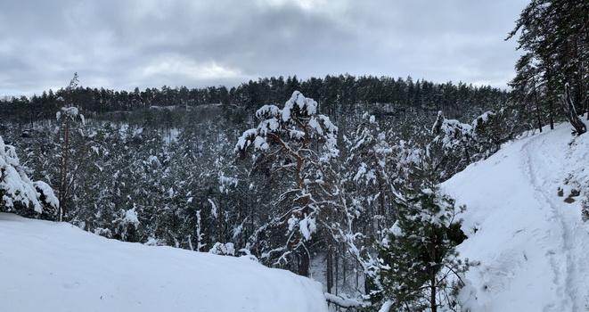 Pohled z Martinské stěny a krásně rostlé borovice