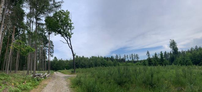 Lesy kolem Řitky už byly místy trochu prořídlé