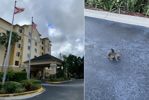 Před hotelem jsme se ještě rozloučili s místní veverkou, která nás doprovázela takřka každou chvíli, když jsme se pohybovali po parkovišti.